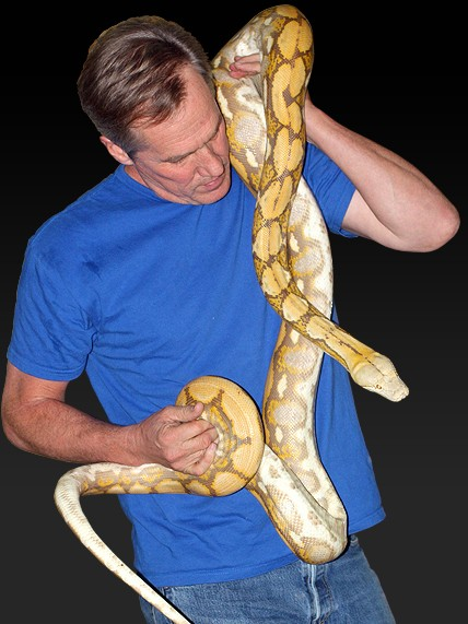 Bob Clark Reptiles : Available Boas