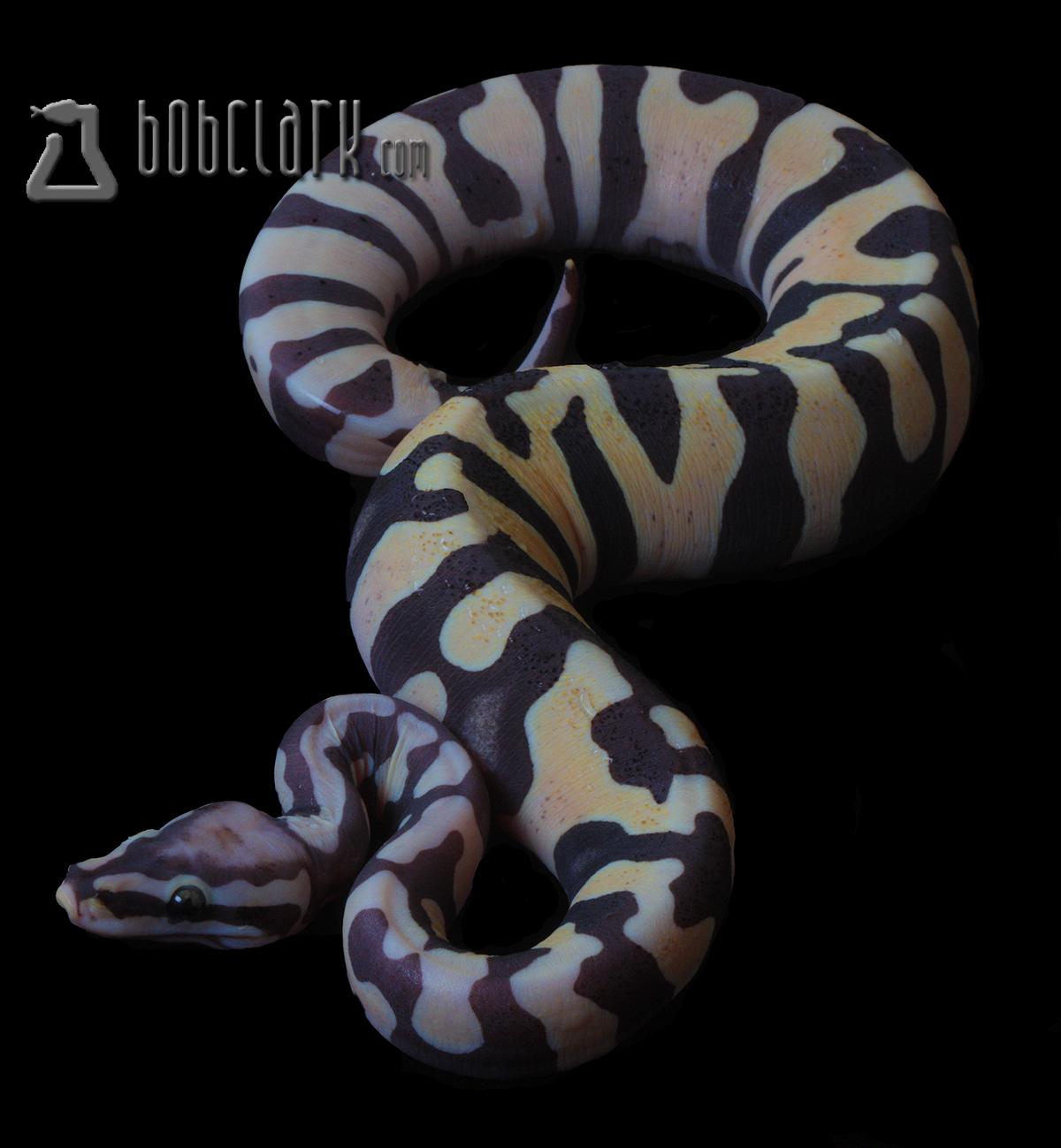 Bob Clark Reptiles : Available